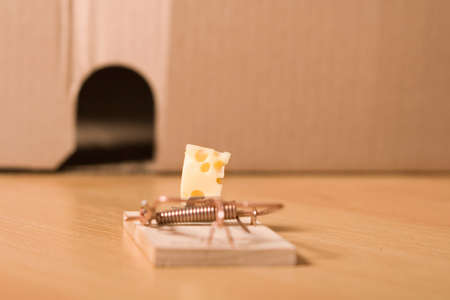 decoy: mousetrap and cheese Stock Photo