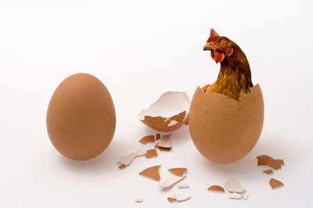 Who was the first, the chicken or the egg? Illustrated philosophical dilemma.