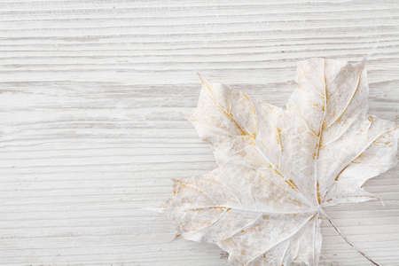 White Wooden Background, Maple Leaf Decoration as Winter Color, Colored Wood Plank Texture Stock Photo