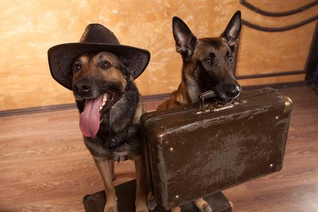 Due viaggiatori di cani con casees in occhiali