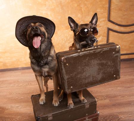 Deux voyageurs chiens avec des cas dans des lunettes Banque d'images - 71799497