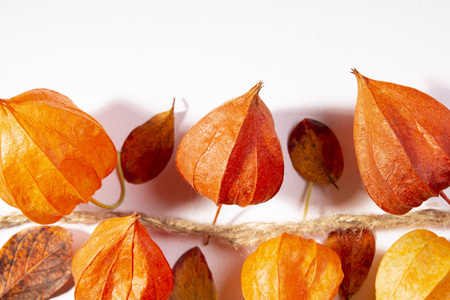 Physalis on the white background