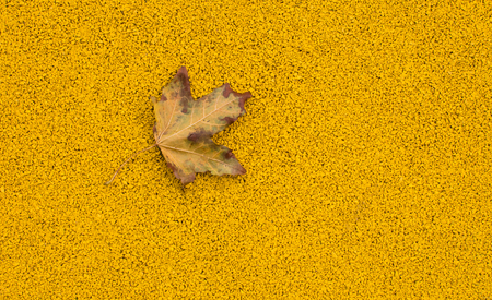 autumn maple leaf on the sports field