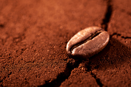 one coffee bean on ground coffee