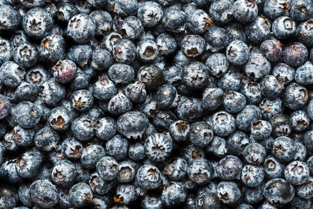 The texture of fresh blueberries. Top View