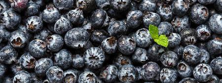 Fresh blueberries with green leaf. 免版税图像
