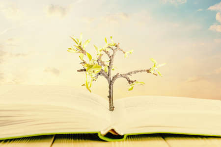 The creative concept of the knowledge tree. The tree grows through the book. 版權商用圖片