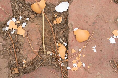 Eggshell on the stone floor close-up. chicken egg crushed. the feed for the chickens Фото со стока