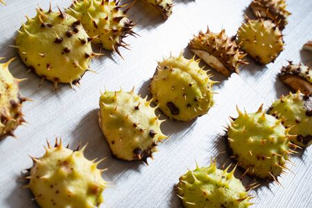 green prickly chestnut shells on a light gray wooden table. autumn background