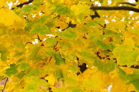 beautiful natural background texture of colorful autumn leaves. Wallpaper design