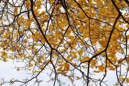 beautiful natural background texture of colorful autumn leaves on tree branches . Wallpaper design