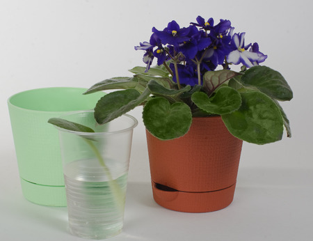 agronomics: the photo of a house violet on a light background.