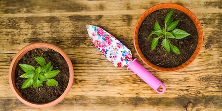 two on top: two brown flowerpots with plants a garden multicolored shovel with the pink handle stand on an old wooden board. Top view.