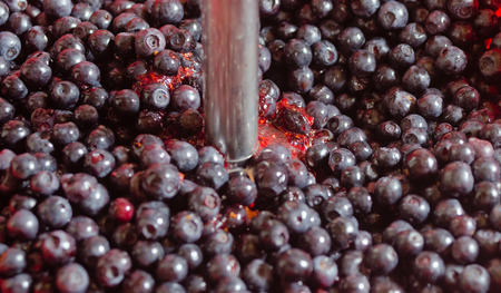 bilberry: Process of processing of wild berries of bilberry manual mixer.
