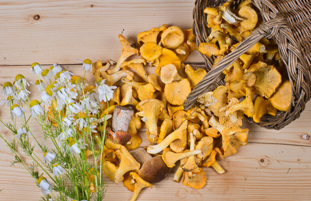 camomiles: the wattled basket with edible fungi costs on a wooden surface. Nearby bouquet of field camomiles Stock Photo