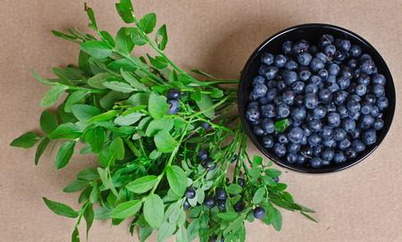bilberry: bilberry berries in a small black plate. Nearby a bilberry bush with berries. It is removed on a cardboard background. Stock Photo