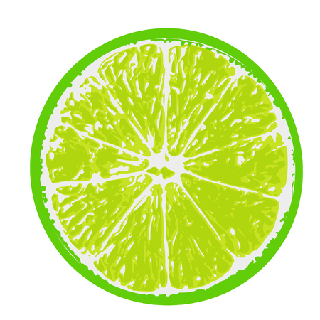 vector illustration of lime fruit, cut in half