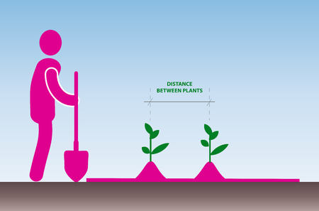 Clipart on the theme of gardening. man with a shovel next to the garden, which shows two plants. the distance between the splits on the background of the light blue sky is indicated.