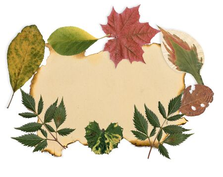 Leaves of different colors with old burnt paper. Stock Photo