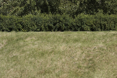 well maintained: mown grass on the hill and well maintained   shrubs as texture Stock Photo