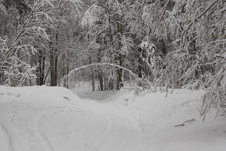 huellas de neumaticos: El camino pasa por debajo del �rbol en forma de arch.Road curva cubierta de nieve. Ramas de los �rboles en la nieve .Tire pistas en la nieve. D�a nublado en el bosque de invierno. Foto de archivo
