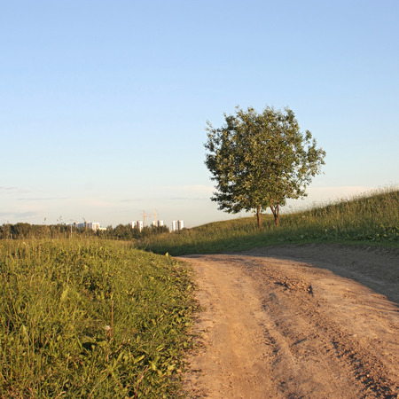 crone: two green tree on a hill near a dirt road and construction of houses away. Stock Photo