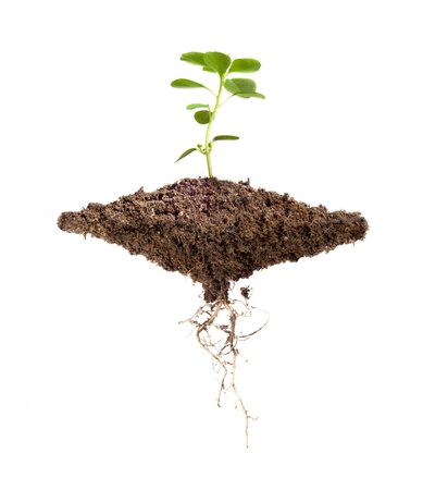 Floating piece of dirt with a growing plant on the top and the roots of the plant at the bottom over a white background