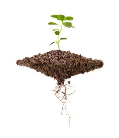 Galleggiante pezzo di sporco con una pianta che cresce sulla parte superiore e le radici della pianta in basso su uno sfondo bianco