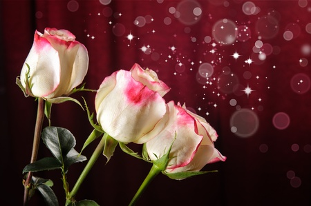 white and pink rose flower design photo