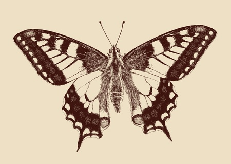 dessin papillon: papillon machaon Papilio machaon