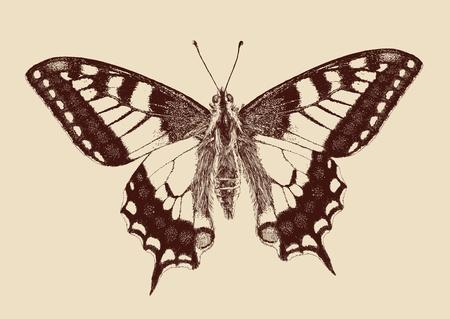 vlinder Swallowtail Papilio machaon