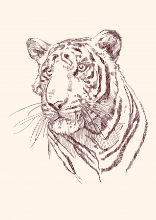 Tiger hand drawn Vector