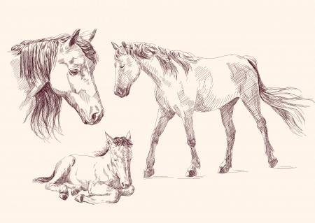 cabeza de caballo: colecci�n de caballos Vectores