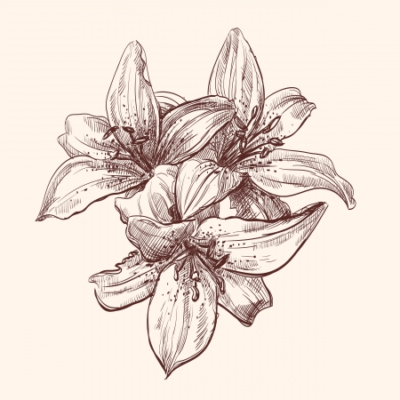 pencil plant: illustration lily