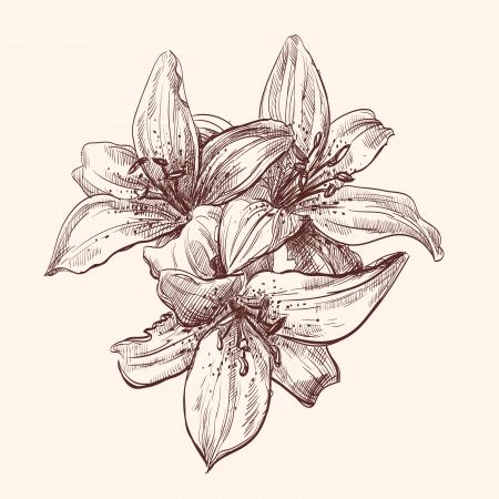 lily leaf: illustration lily