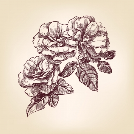 etched: hand drawn roses