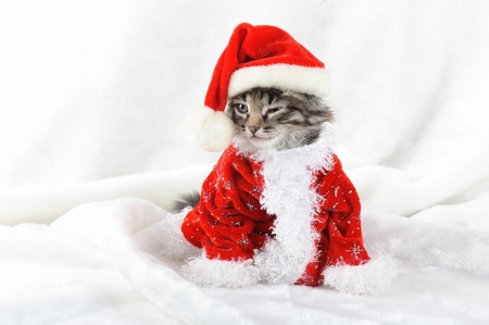 Christmas kitten in Santa stocking hat and scarf isolated