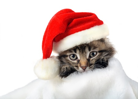 Christmas kitten in Santa stocking hat and scarf isolated photo