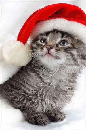 Christmas kitten  Stock Photo - 16383707