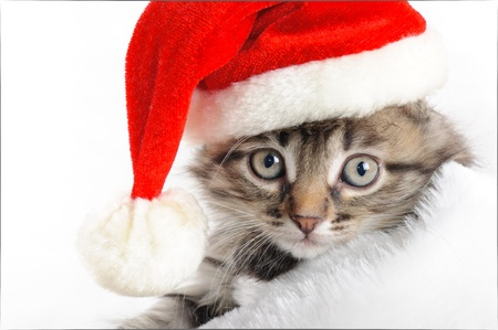 Christmas kitten  Stock Photo - 16383704