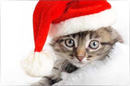Christmas kitten Imagens - 16383704