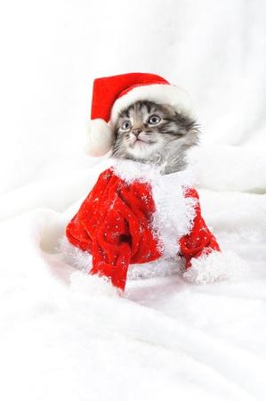 Christmas kitten Stock Photo - 16383702