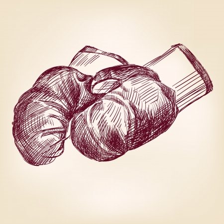 boxing gloves hand drawing Stock Vector - 16380793