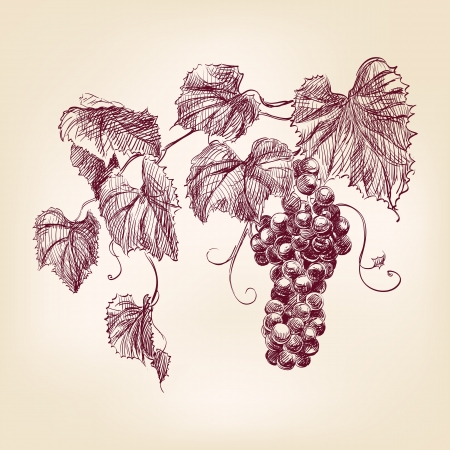 grappe de raisin Vecteurs
