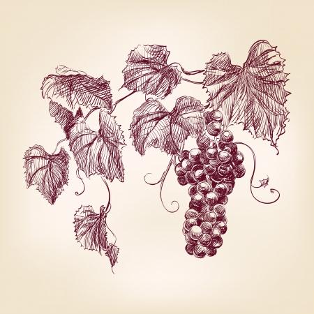 uvas: racimo de uvas Vectores