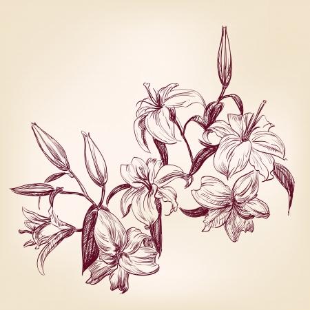 pencil sketch: illustration lily