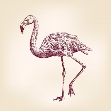 flamingo: flamingo hand drawn Illustration