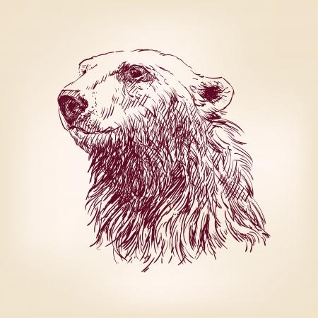 bear silhouette: orso polare disegnato a mano Vettoriali
