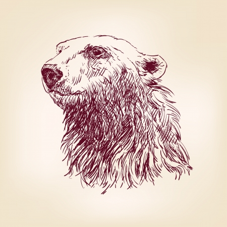bear silhouette: polar bear hand drawn Illustration