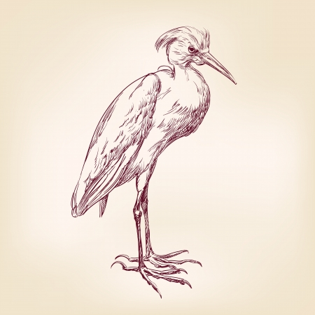 Heron hand drawn Vector